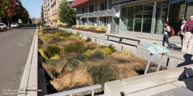 Stormwater Elements