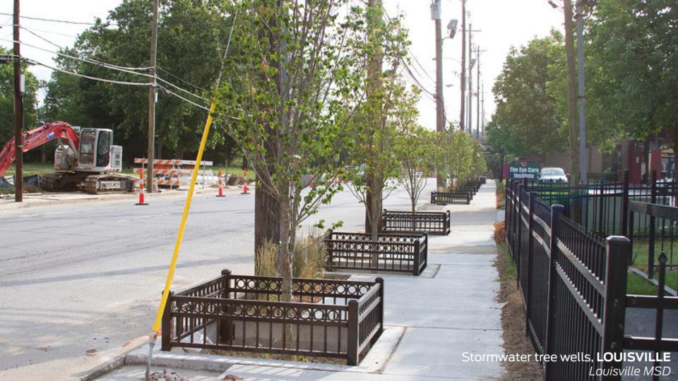 street tree management geraldton pdf