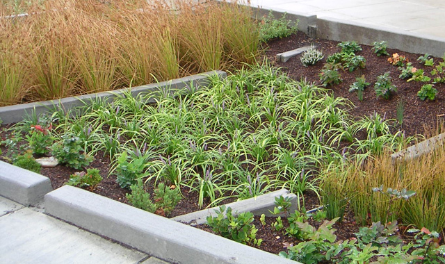 Bioswale - Portland, ORThis bioswale in Portland calms traffic and manages stormwater.